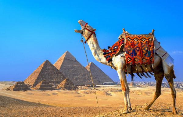 Приобрести тур в Египет
